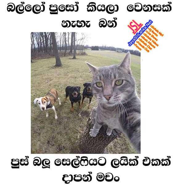 sinhala joke picture