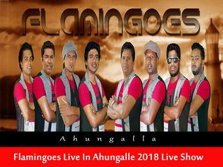 Flamingoes Live in Ahungalle 2018 Live Show Image